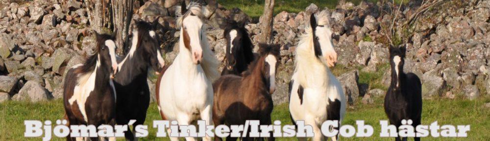 Bjömar´s Tinker/Irish Cob hästar